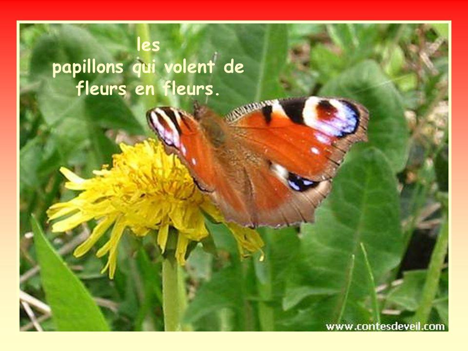 les papillons qui volent de fleurs en fleurs.