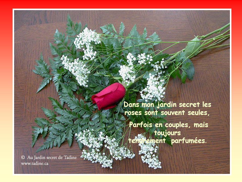 Dans mon jardin secret les roses sont souvent seules,