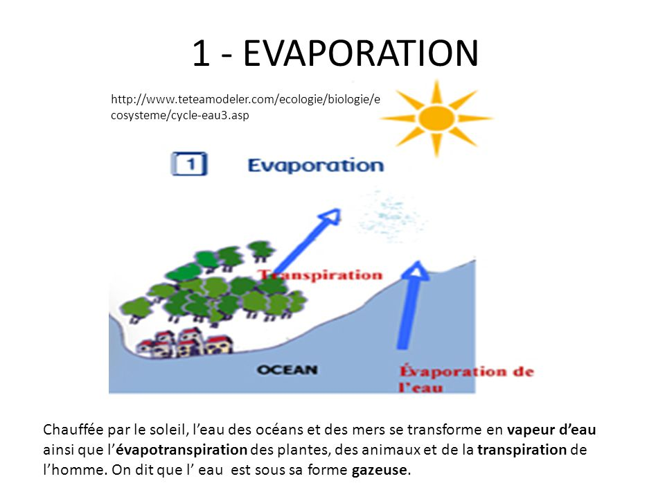 1 - EVAPORATION http://www.teteamodeler.com/ecologie/biologie/ecosysteme/cycle-eau3.asp.