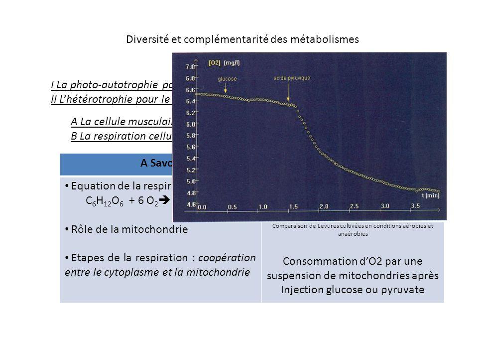 Comparaison de Levures cultivées en conditions aérobies et anaérobies