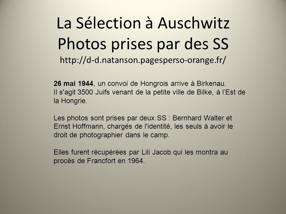 La Sélection à Auschwitz Photos prises par des SS http://d-d. natanson