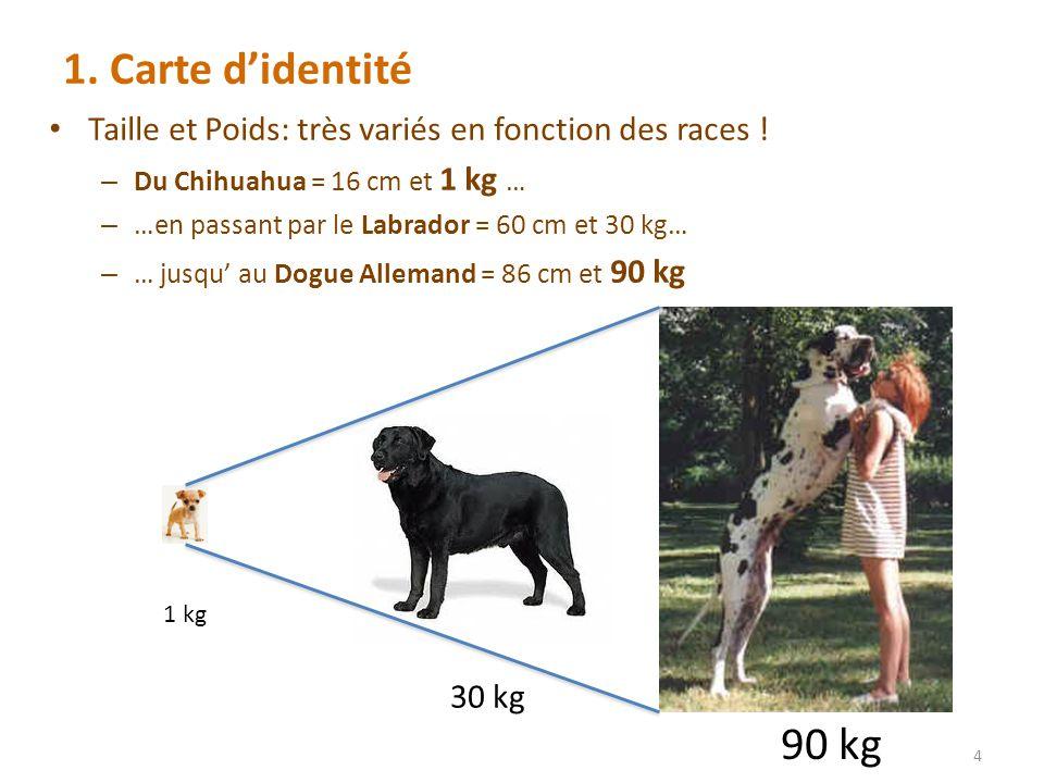 1. Carte d'identité Taille et Poids: très variés en fonction des races ! Du Chihuahua = 16 cm et 1 kg …