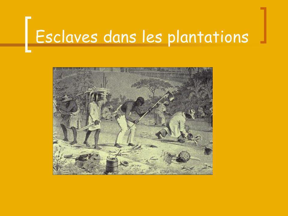 Esclaves dans les plantations