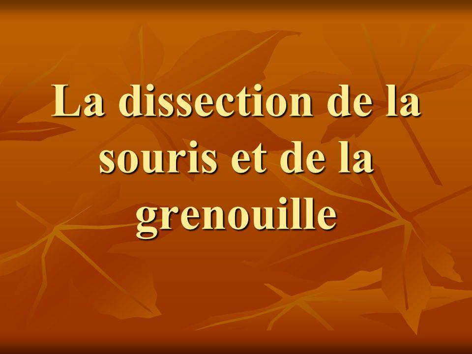 La dissection de la souris et de la grenouille