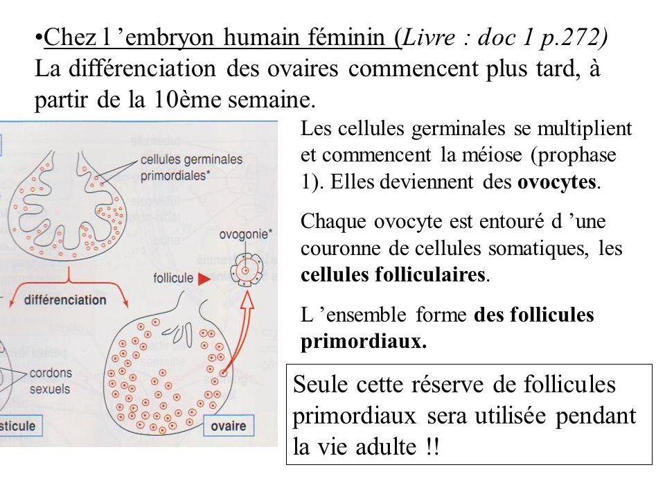 Chez l 'embryon humain féminin (Livre : doc 1 p.272)
