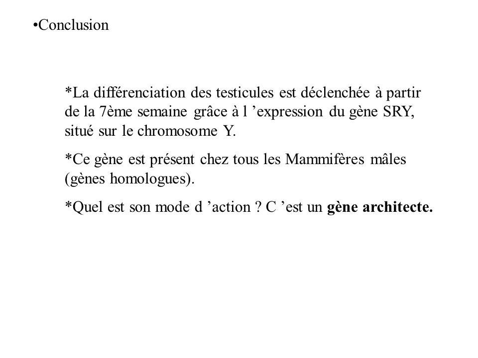Conclusion La différenciation des testicules est déclenchée à partir de la 7ème semaine grâce à l 'expression du gène SRY, situé sur le chromosome Y.