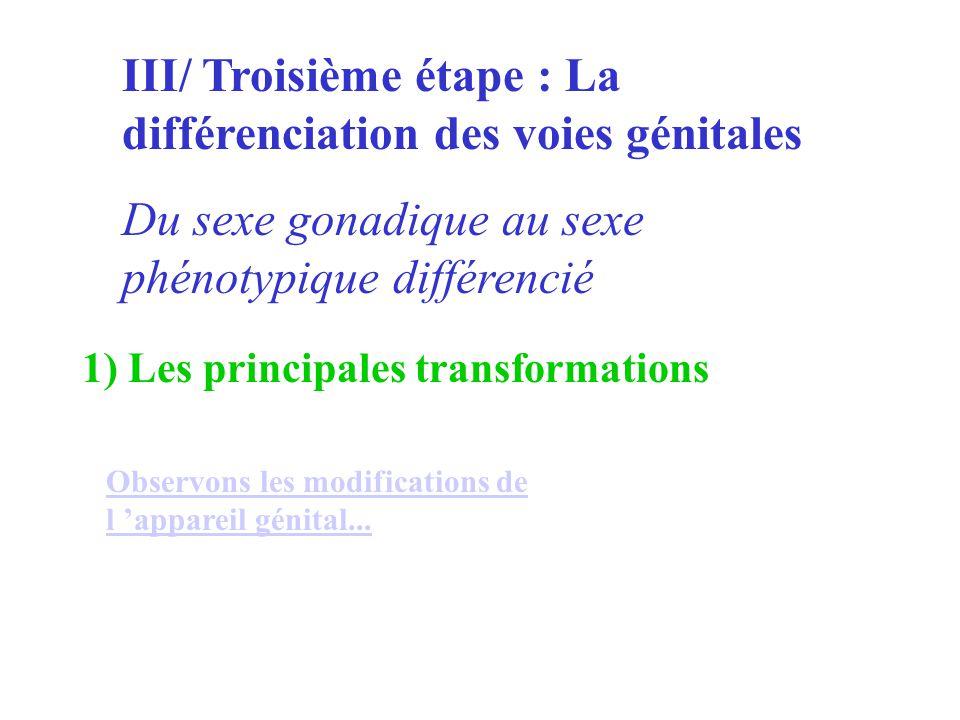 III/ Troisième étape : La différenciation des voies génitales