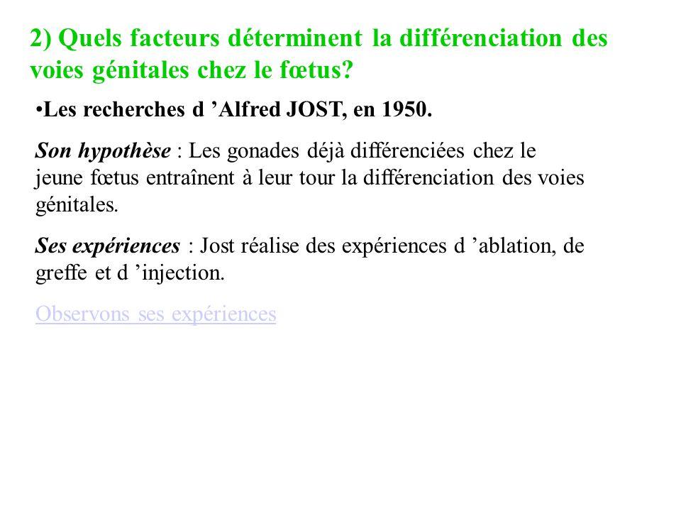 2) Quels facteurs déterminent la différenciation des voies génitales chez le fœtus