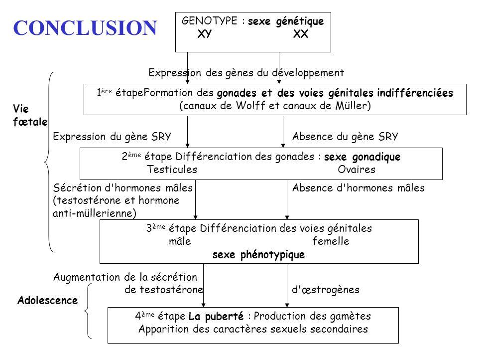CONCLUSION GENOTYPE : sexe génétique XY XX