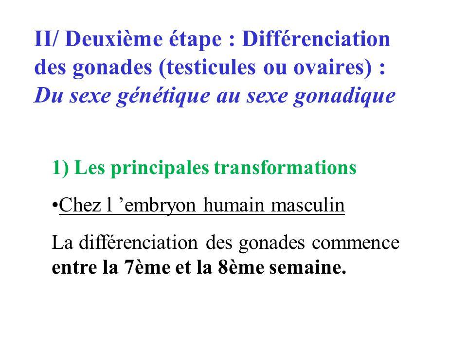 II/ Deuxième étape : Différenciation des gonades (testicules ou ovaires) : Du sexe génétique au sexe gonadique