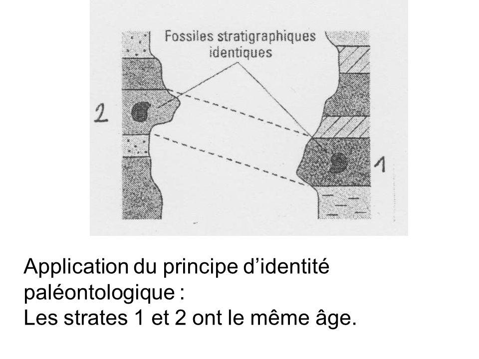 Application du principe d'identité paléontologique :