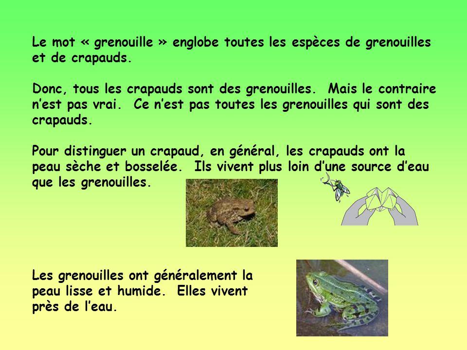 Le mot « grenouille » englobe toutes les espèces de grenouilles et de crapauds.