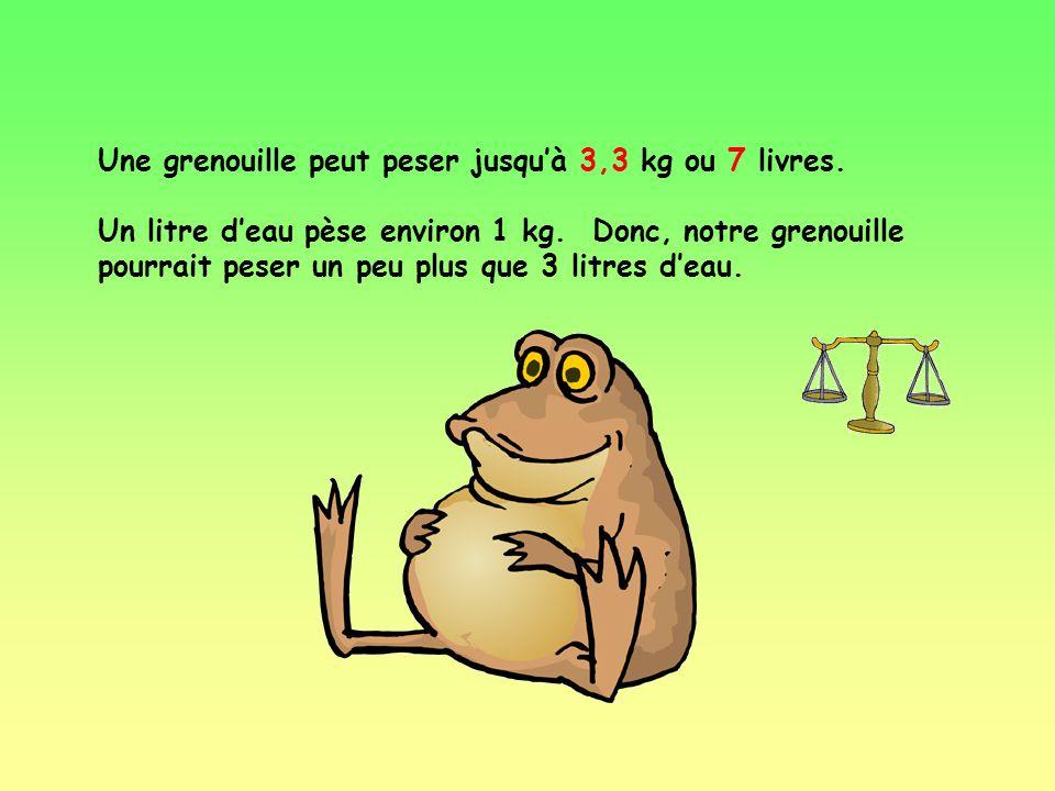 Une grenouille peut peser jusqu'à 3,3 kg ou 7 livres.