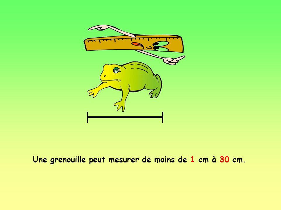Une grenouille peut mesurer de moins de 1 cm à 30 cm.