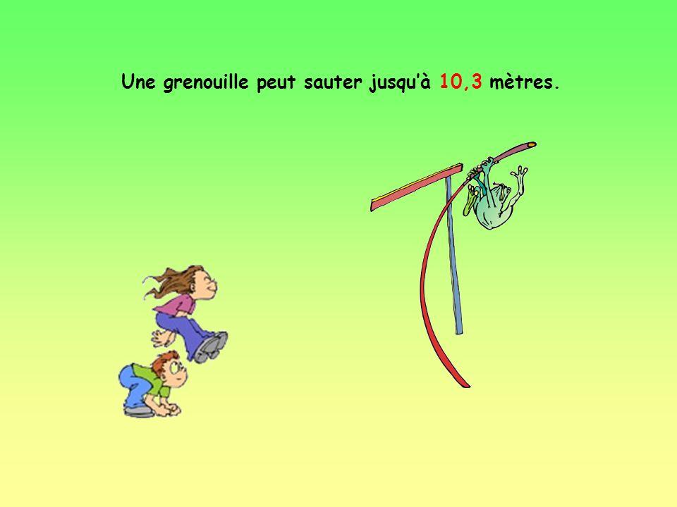 Une grenouille peut sauter jusqu'à 10,3 mètres.