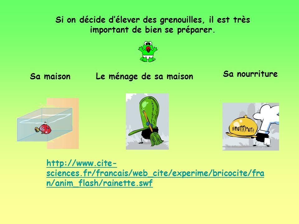 Si on décide d'élever des grenouilles, il est très important de bien se préparer.