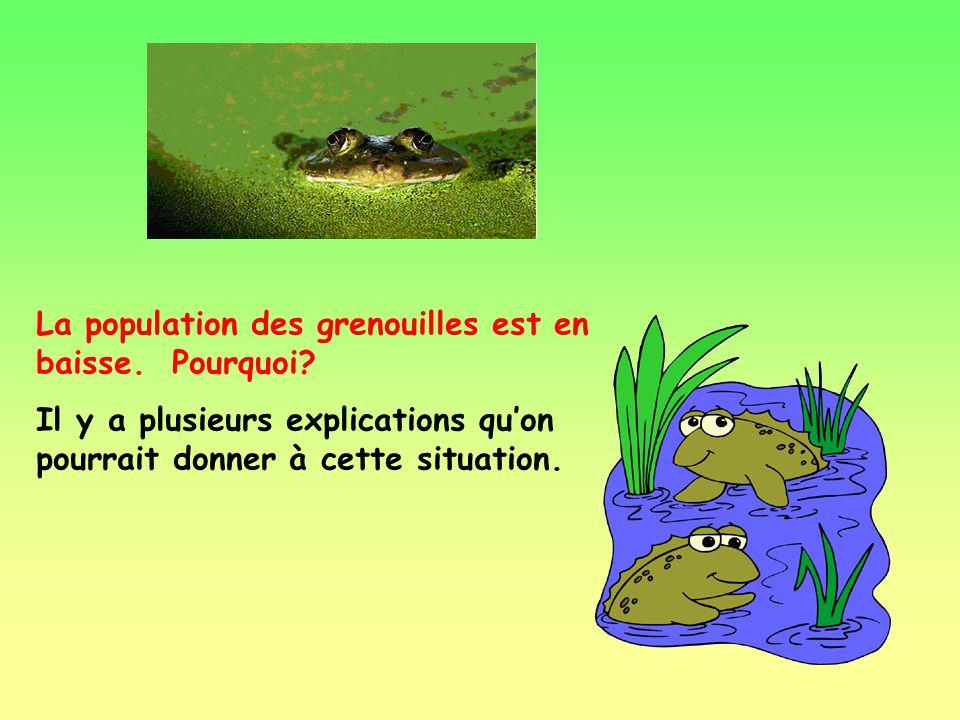 La population des grenouilles est en baisse. Pourquoi