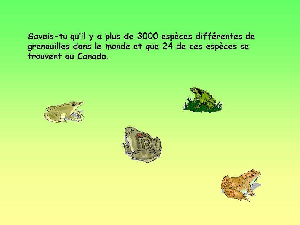 Savais-tu qu'il y a plus de 3000 espèces différentes de grenouilles dans le monde et que 24 de ces espèces se trouvent au Canada.