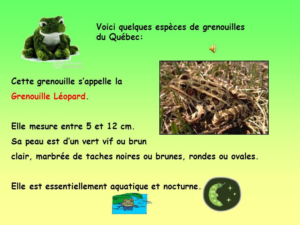 Voici quelques espèces de grenouilles du Québec: