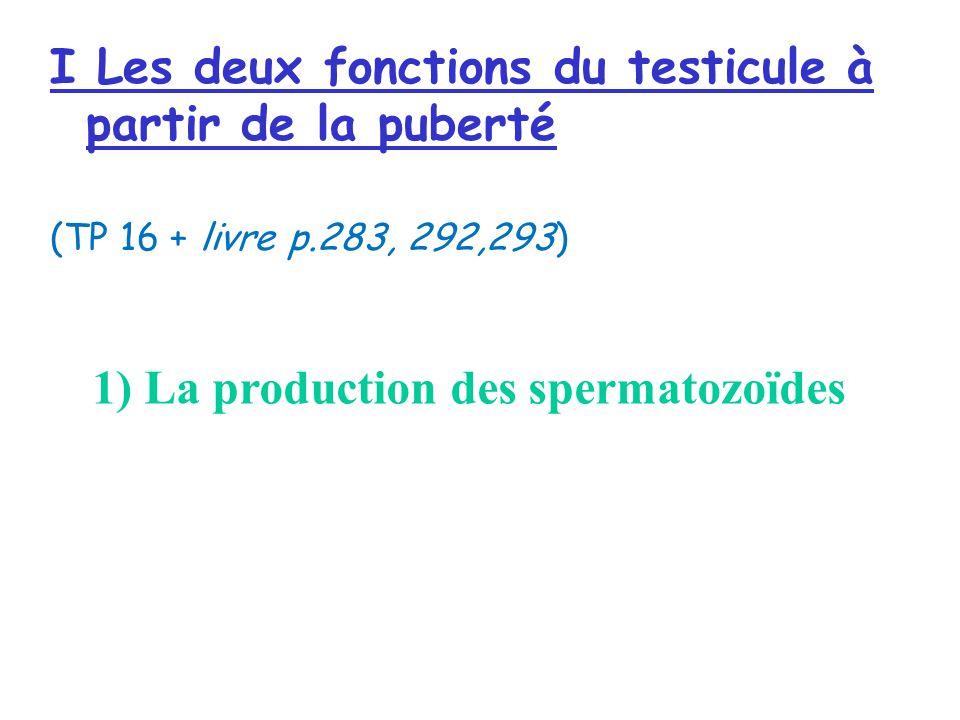 I Les deux fonctions du testicule à partir de la puberté