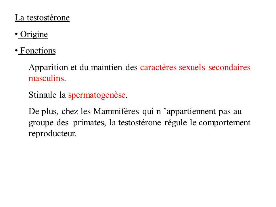 La testostérone Origine. Fonctions. Apparition et du maintien des caractères sexuels secondaires masculins.