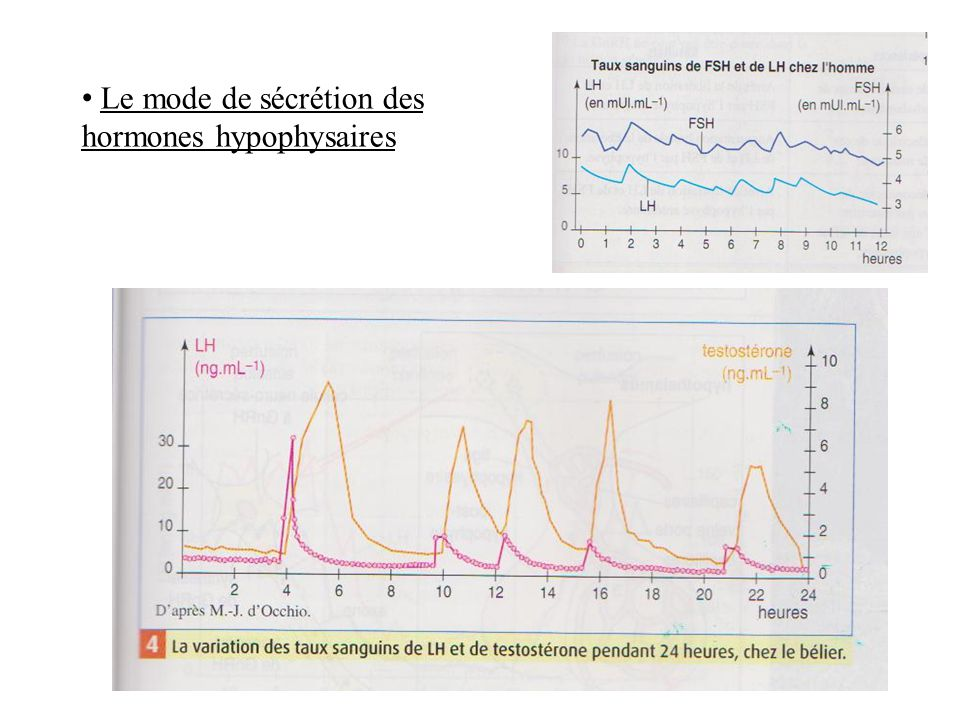 Le mode de sécrétion des hormones hypophysaires