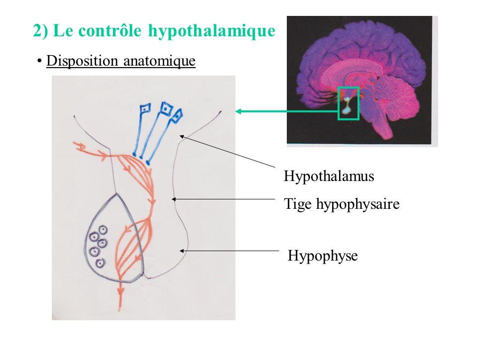 2) Le contrôle hypothalamique