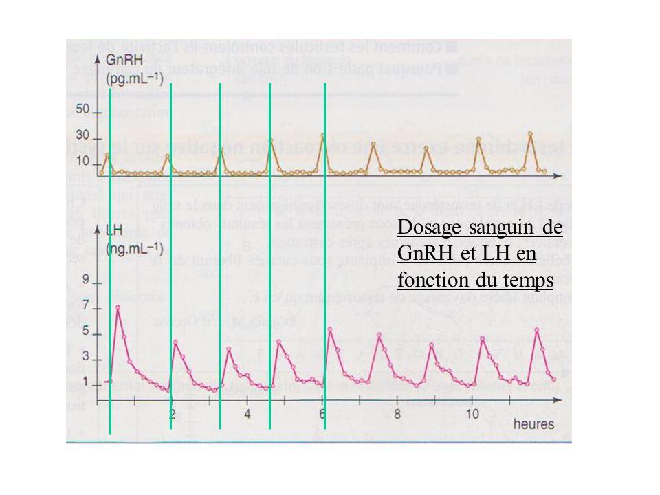 Dosage sanguin de GnRH et LH en fonction du temps