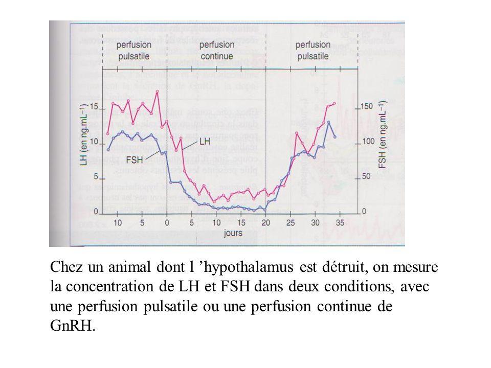 Chez un animal dont l 'hypothalamus est détruit, on mesure la concentration de LH et FSH dans deux conditions, avec une perfusion pulsatile ou une perfusion continue de GnRH.