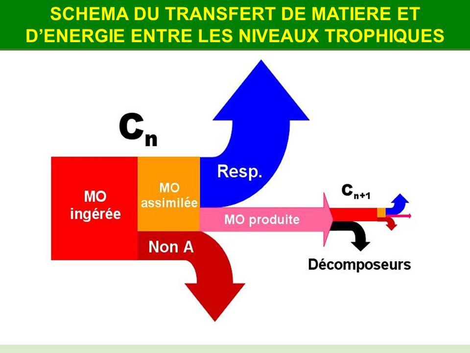 SCHEMA DU TRANSFERT DE MATIERE ET D'ENERGIE ENTRE LES NIVEAUX TROPHIQUES