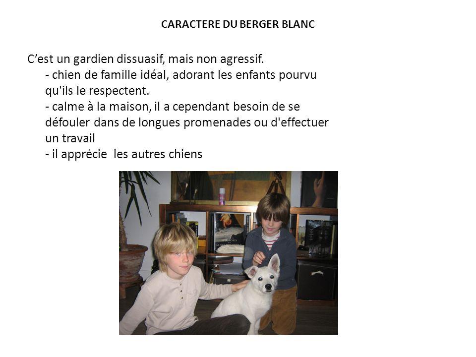 CARACTERE DU BERGER BLANC