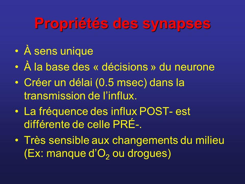 Propriétés des synapses