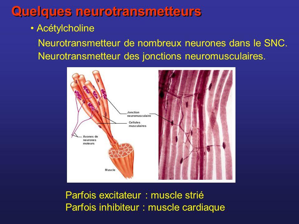 Quelques neurotransmetteurs