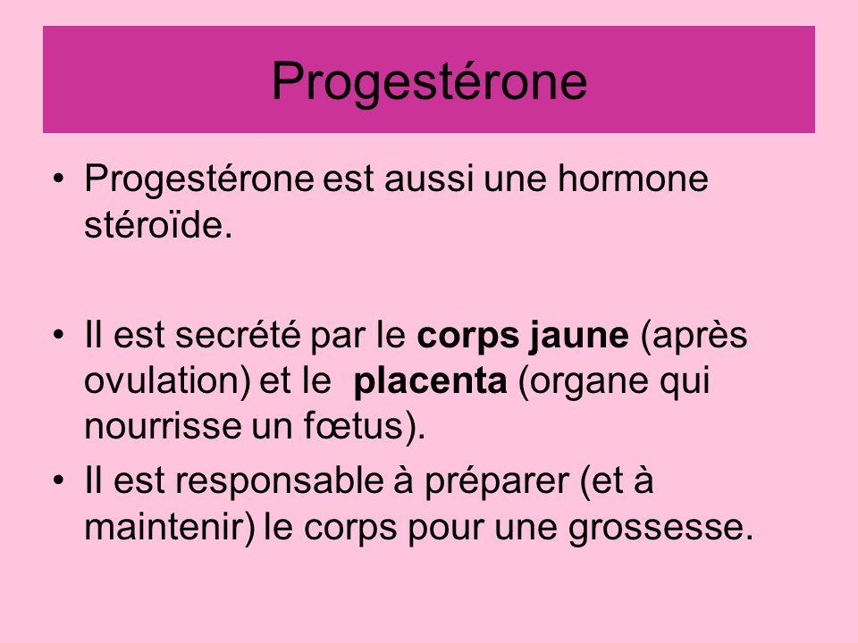 Progestérone Progestérone est aussi une hormone stéroïde.