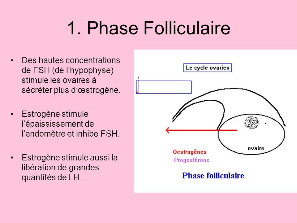 1. Phase Folliculaire Des hautes concentrations de FSH (de l'hypophyse) stimule les ovaires à sécréter plus d'œstrogène.