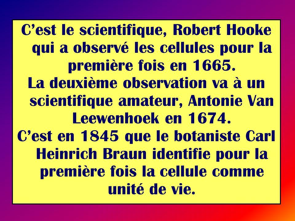 C'est le scientifique, Robert Hooke qui a observé les cellules pour la première fois en 1665.