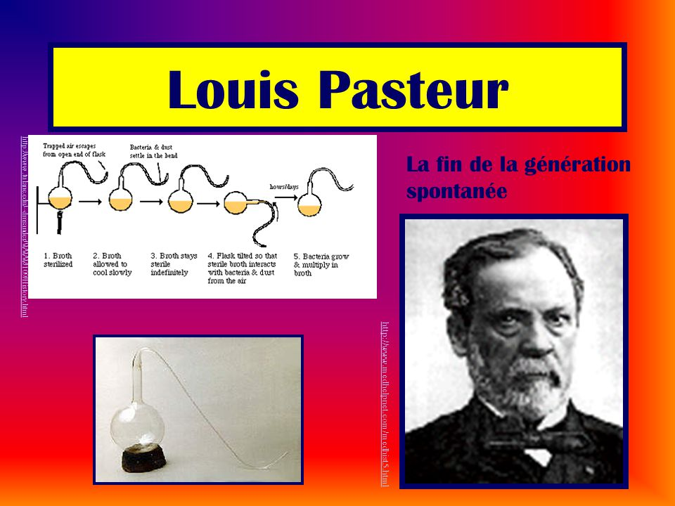 Louis Pasteur La fin de la génération spontanée