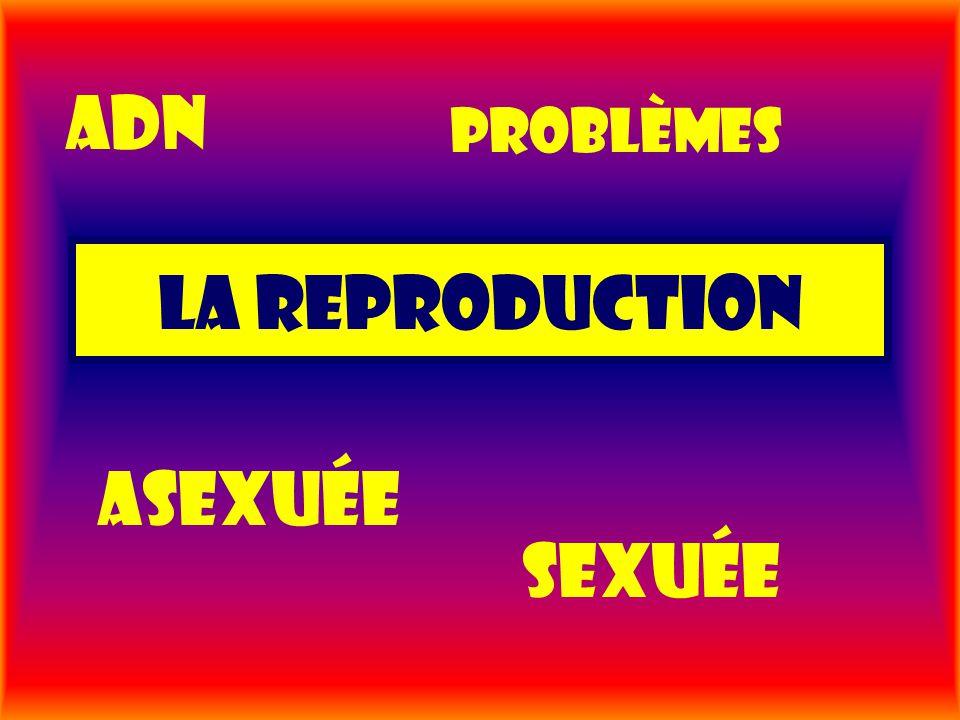Adn problèmes La reproduction Asexuée sexuée