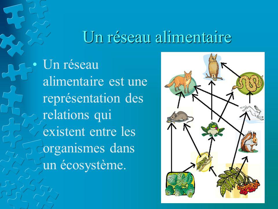 Un réseau alimentaire Un réseau alimentaire est une représentation des relations qui existent entre les organismes dans un écosystème.