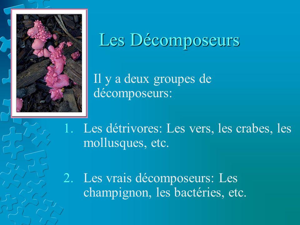 Les Décomposeurs Il y a deux groupes de décomposeurs: