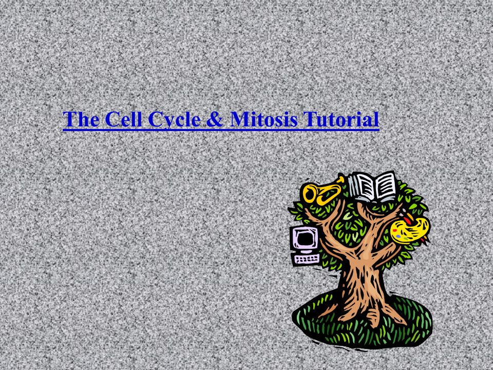 The Cell Cycle & Mitosis Tutorial