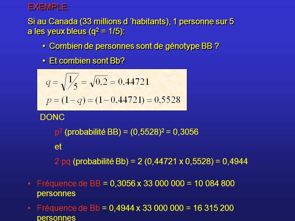 EXEMPLE: Si au Canada (33 millions d 'habitants), 1 personne sur 5 a les yeux bleus (q2 = 1/5): Combien de personnes sont de génotype BB