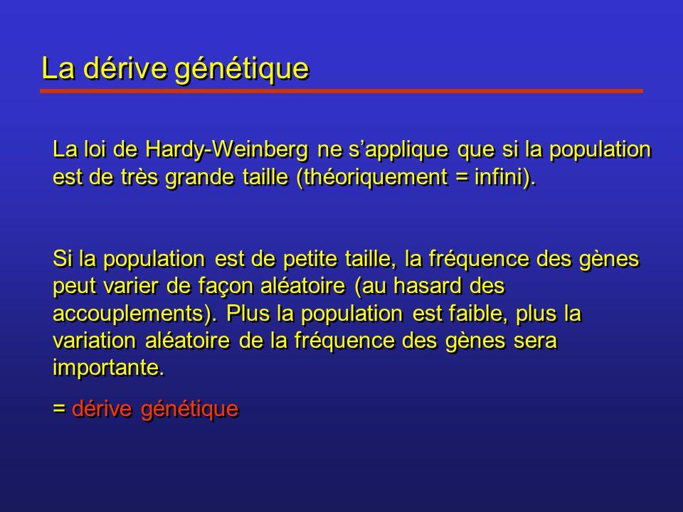 La dérive génétique La loi de Hardy-Weinberg ne s'applique que si la population est de très grande taille (théoriquement = infini).
