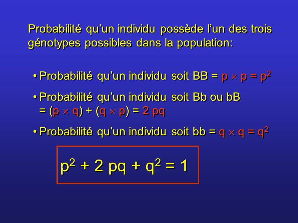 Probabilité qu'un individu possède l'un des trois génotypes possibles dans la population: