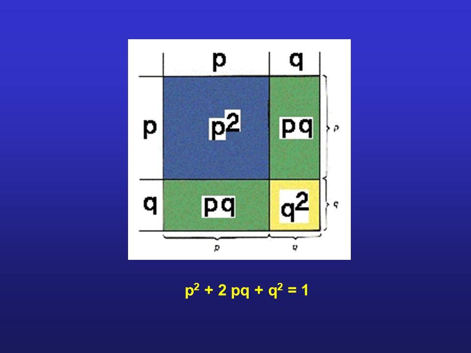 p2 + 2 pq + q2 = 1