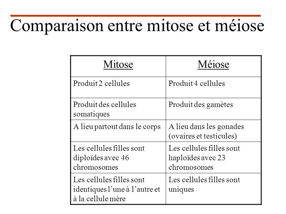 Comparaison entre mitose et méiose