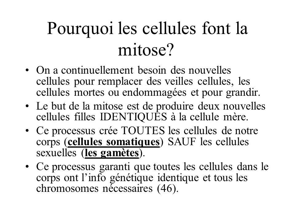 Pourquoi les cellules font la mitose