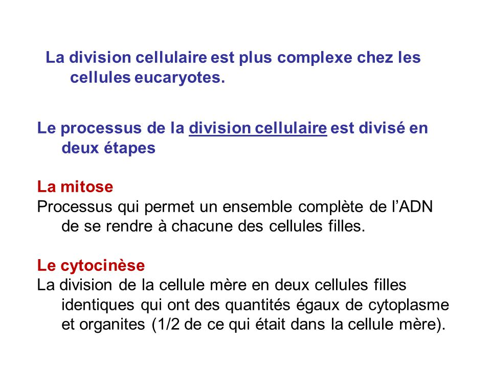 La division cellulaire est plus complexe chez les cellules eucaryotes.