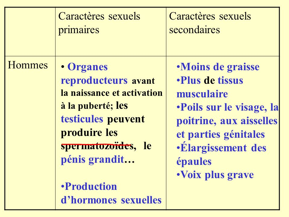 Caractères sexuels primaires
