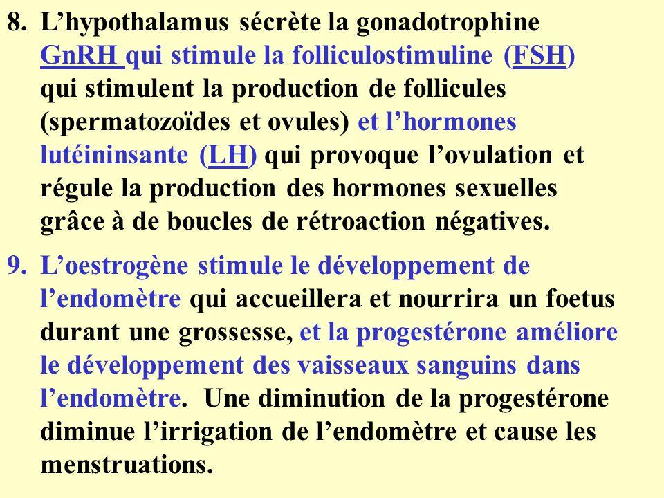 L'hypothalamus sécrète la gonadotrophine GnRH qui stimule la folliculostimuline (FSH) qui stimulent la production de follicules (spermatozoïdes et ovules) et l'hormones lutéininsante (LH) qui provoque l'ovulation et régule la production des hormones sexuelles grâce à de boucles de rétroaction négatives.